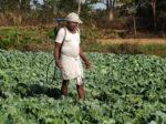 Новый гель защитит фермеров от пестицидов