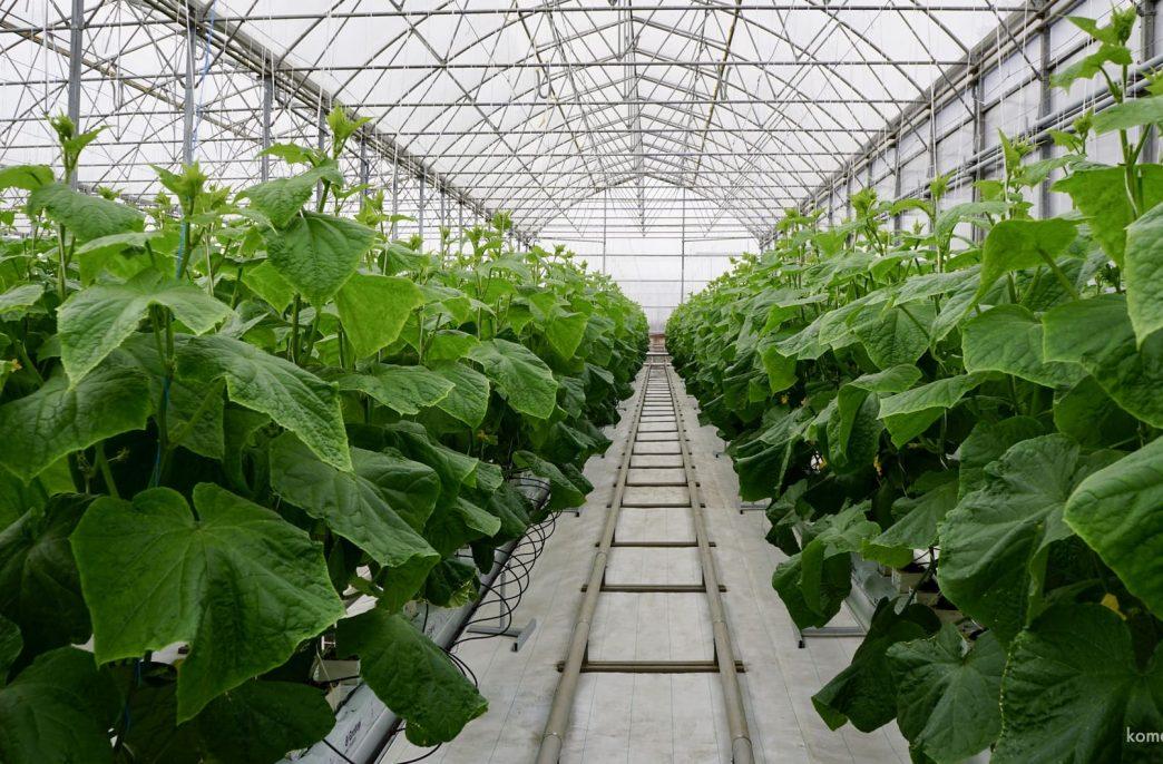 В Ростовской области появятся новые тепличные комплексы