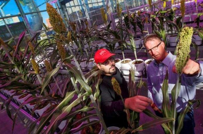 В США повысят азотную эффективность растений