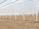 В Чувашии строится крупный тепличный комплекс