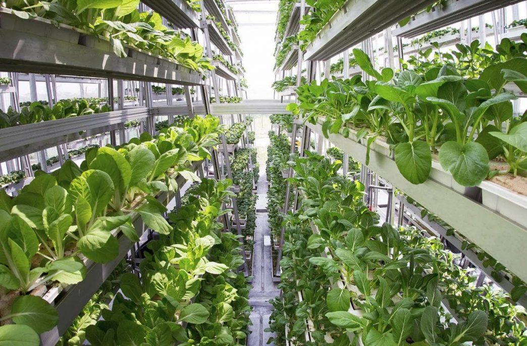 Вертикальные фермы завоевывают мир