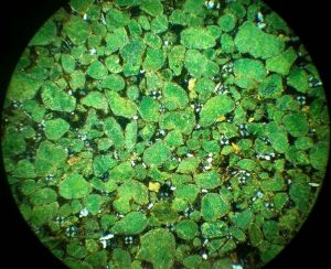 Parkway Minerals приблизилась к открытию крупного месторождения