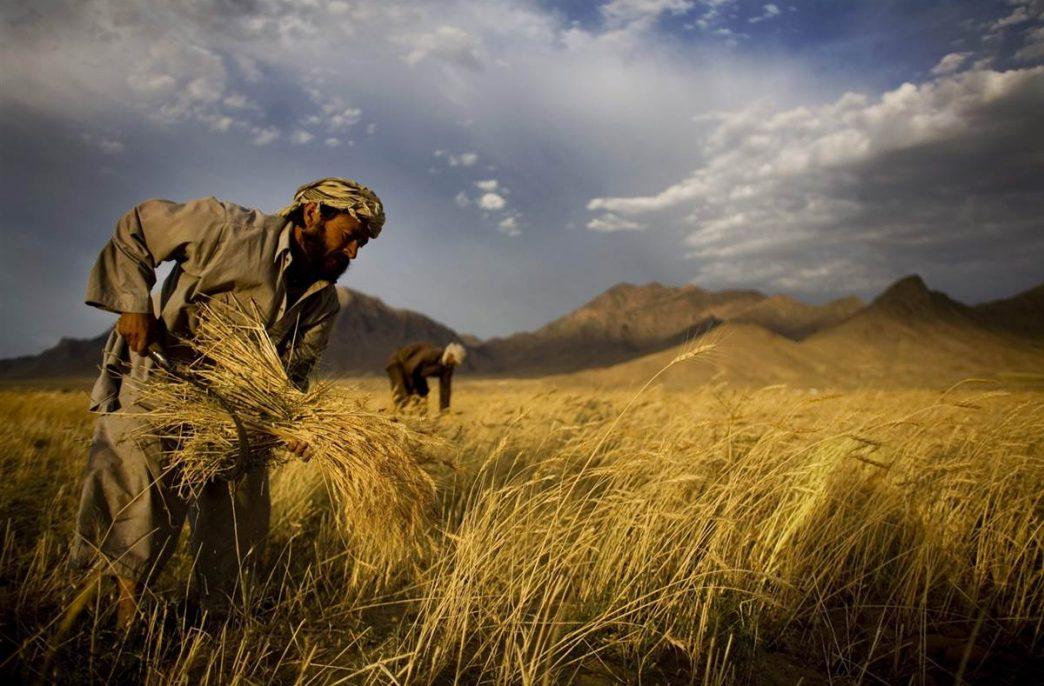 В Пакистане снизилось использование удобрений