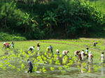 На Шри-Ланке построят завод удобрений