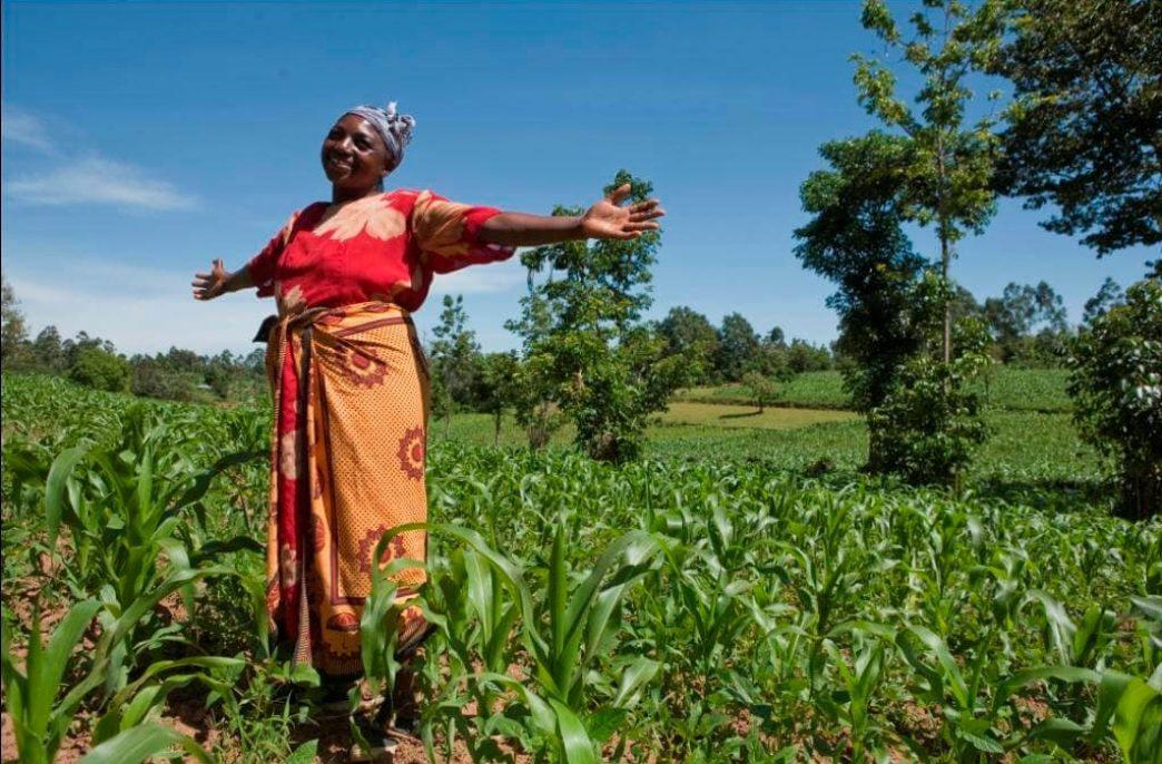 Фермеры Ганы получат субсидии