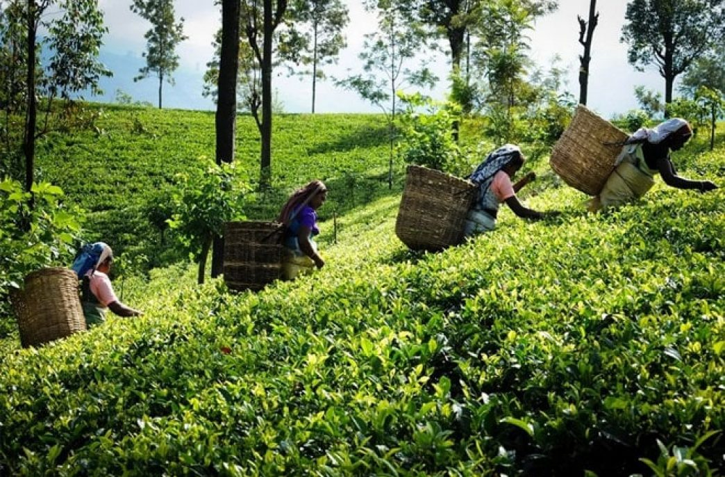Шри-Ланка объявила два выгодных тендера