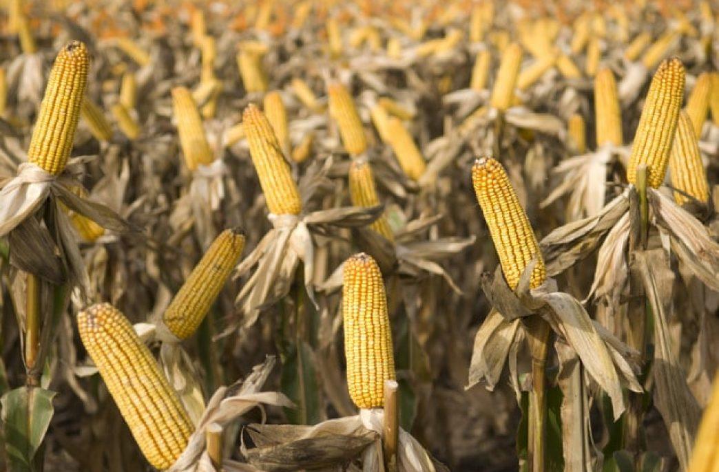 В Аргентине ожидают роста урожаев