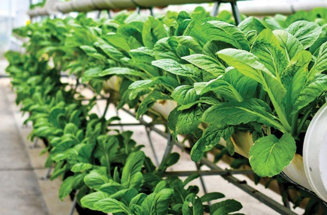 Вертикальные фермы помогут снизить преступность