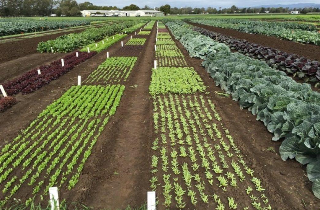 В Эфиопии создали жидкие удобрения