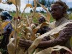 В Кении вспыхнул скандал с поддельными удобрениями