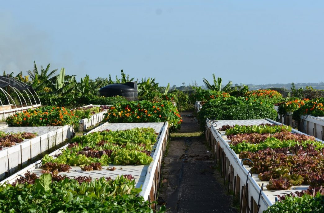 Барбадос ставит на точное земледелие