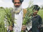 В Пакистане дорожает карбамид
