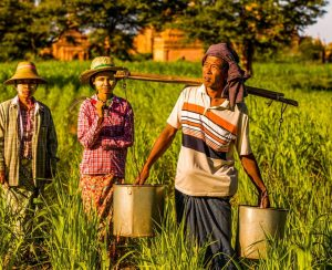 Pupuk Indonesia помогает фермерам Индонезии