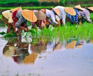 В Таиланде снизились цены на удобрения