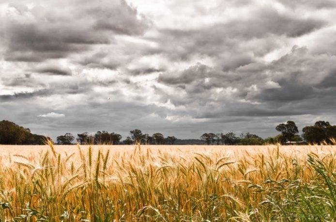 Ученые доказали вред от переизбытка фосфора в почве