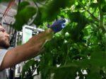 В США открылась вертикальная ферма для аутистов