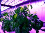 Фермы будущего помогут в борьбе с болезнями