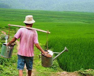 Que Lam Group расширяет производство органических удобрений