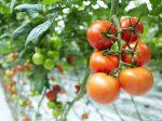 В России прогнозируется увеличение урожая овощей