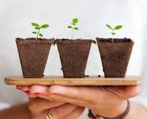 Рейтинг удобрений для комнатных растений