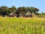 Зимбабве хочет закупать калийные удобрения в Беларуси