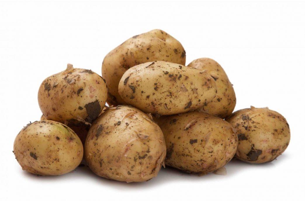 Урожай картофеля в России может приблизится к 23 млн. тонн
