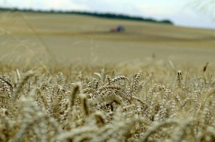 В Челябинской области подведены предварительные итоги весеннего сева