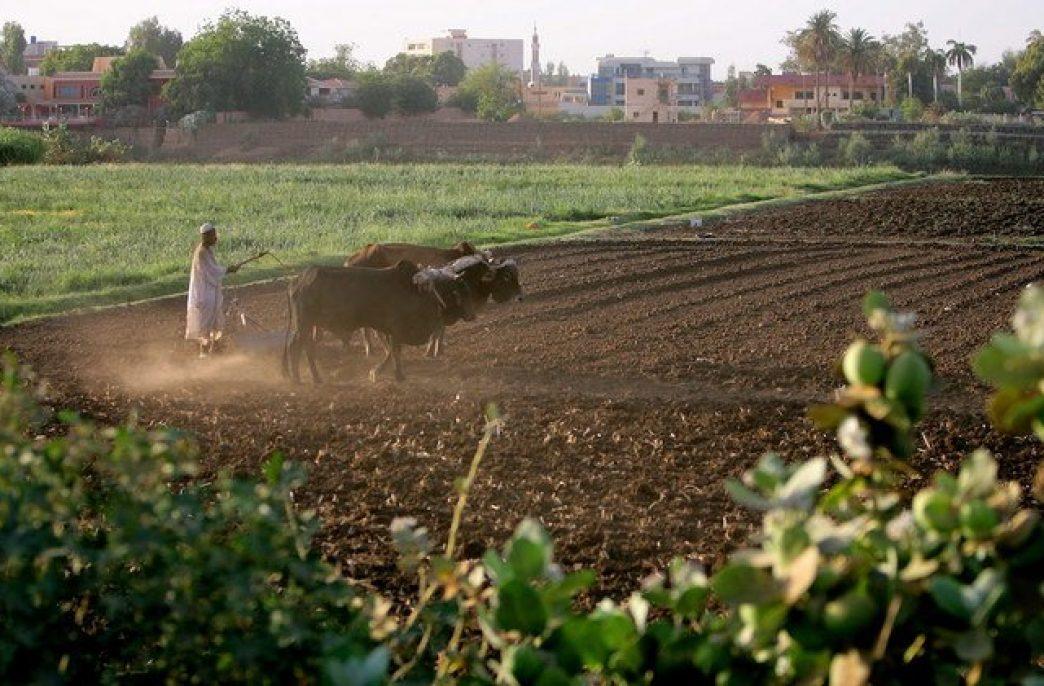 Судан поддержат удобрениями