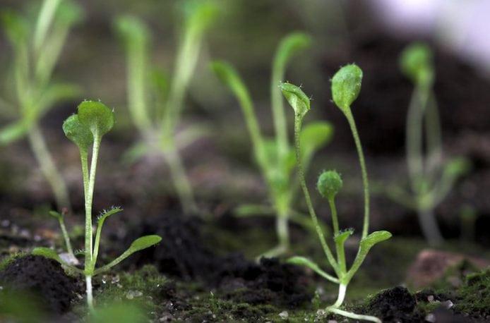 Ученые научились управлять симбиозом грибов и растений