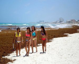 Агрохимикаты стали негативно влиять на туризм в Мексике