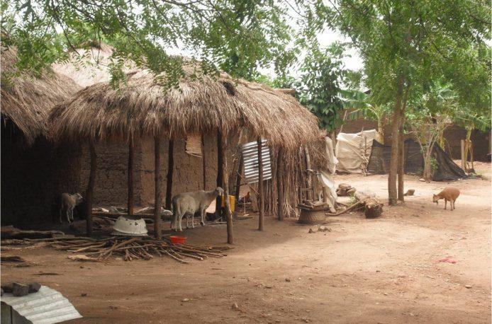 В Гане пытаются помочь мелким фермерам