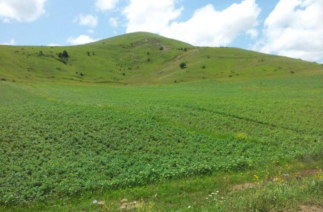 Socar поставит карбамид на рынок Азербайджана