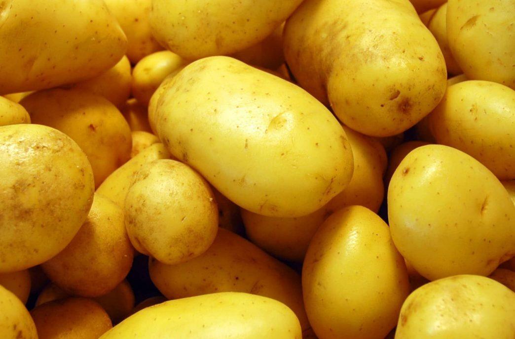«АФГ Националь» увеличила урожайность картофеля