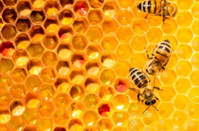 Интернет вещей поможет пчелам