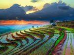 Вьетнам делает ставку на органические удобрения