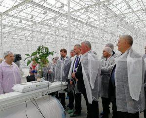 В Коми открылся большой тепличный комплекс