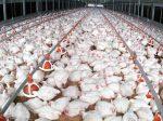 Jewm будет выпускать органические удобрения