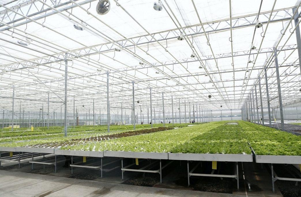 В Краснодарском крае запущен новый тепличный комплекс