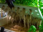 Netled построит англичанам вертикальные фермы