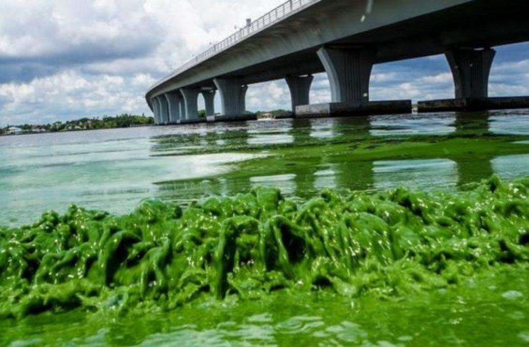 Новый спектрометр поможет защитить водоемы