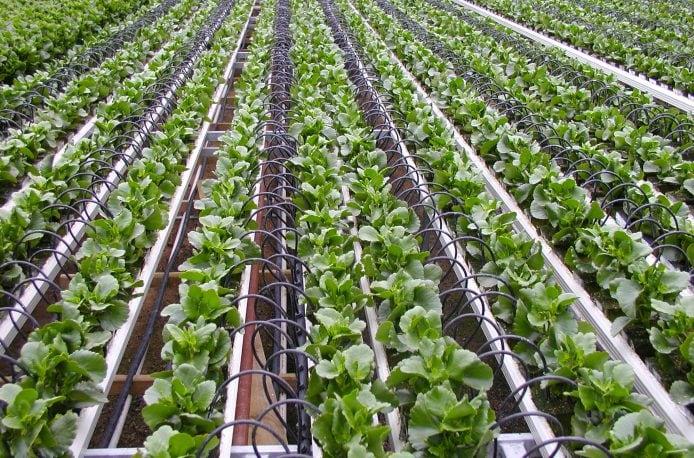 Kiwa Bio-Tech повысила растворимость удобрений