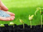 Варианты эффективной подкормки растений