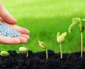 Подкормка растений: для чего нужна, виды удобрений, способы внесения, советы