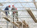 В Вологодской области строится крупный тепличный комплекс
