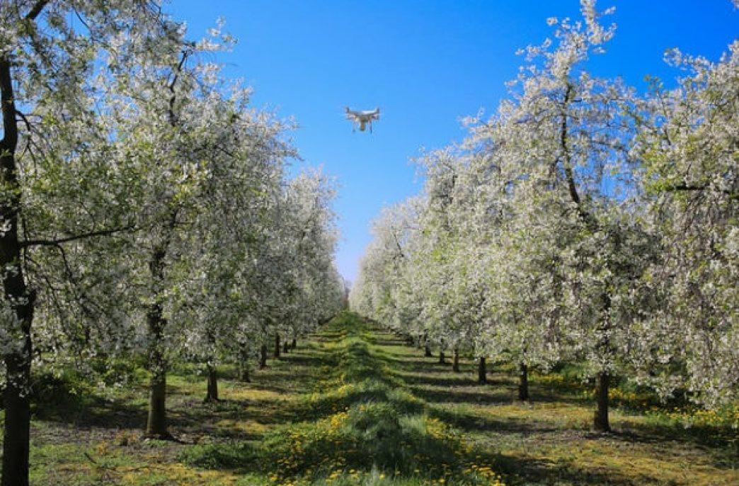 Чили взяла курс на точное земледелие