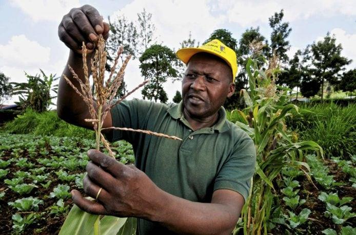 Африканские аграрии получат хорошую поддержку