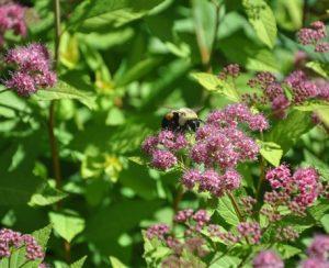 В США разрешили новый пестицид