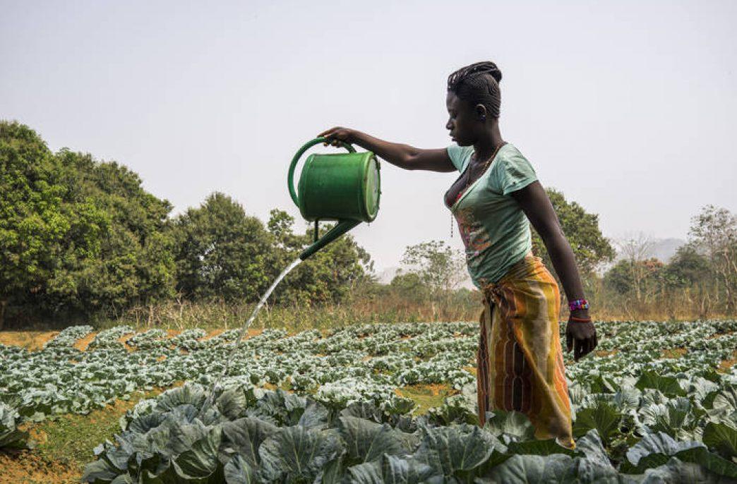 OCP Group изменит сельское хозяйство Африки