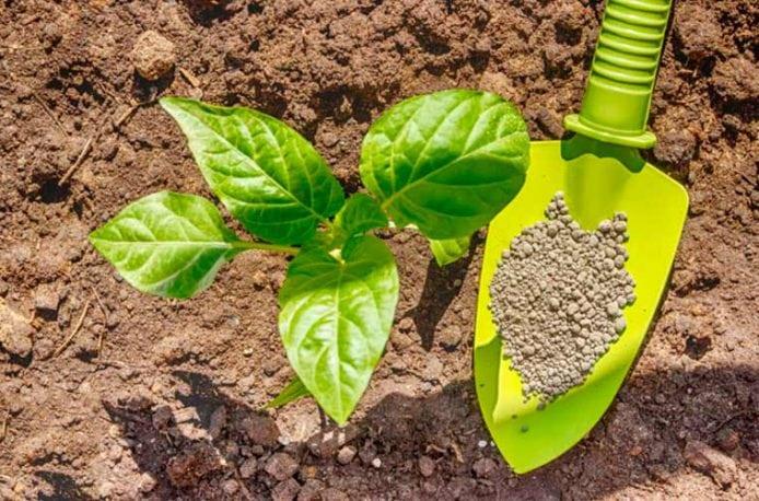 Как правильно применять удобрение суперфосфат на огороде?