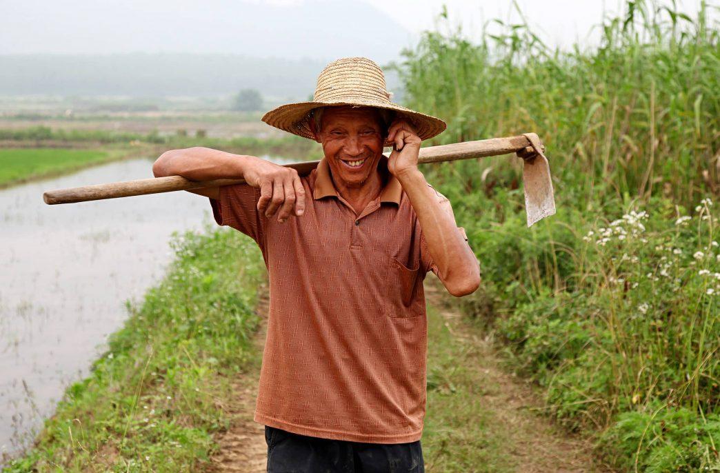 В Китае ждут небывалого урожая зерновых
